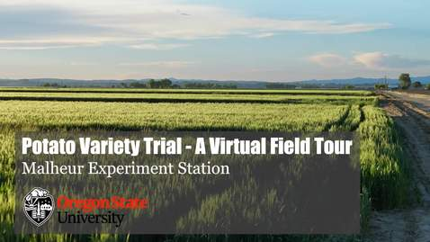Thumbnail for entry Malheur Experiment Station Virtual Field Tour - Potato Variety Trial