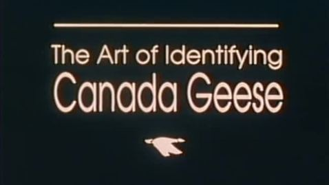 """Thumbnail for entry """"The Art of Identifying Canada Geese,"""" circa 1980s"""