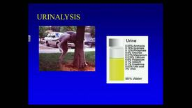 Thumbnail for entry VMB 763 Lecture 21 Urinalysis March 3, 2014