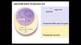 Thumbnail for entry BI 213 - Lecture 09