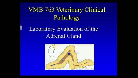 Thumbnail for entry VMB 763 Lecture 22, February 28, Adrenal gland