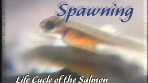 Thumbnail for entry Life Cycle of the Salmon