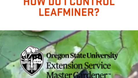Thumbnail for entry How Do I Control Leafminers?