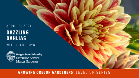 Thumbnail for entry Growing Oregon Gardeners: Dazzling Dahlias with Julie Huynh Moore