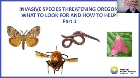 Thumbnail for entry Part I - Invasive Species Threatening Oregon! What to Look For and How to Help - Garden Webinar Series - metro area OSU Extension Service Master Gardener Program
