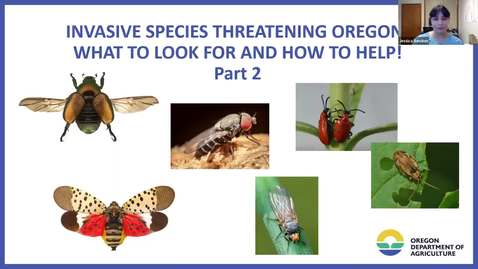 Thumbnail for entry Part II - Invasive Species Threating Oregon! What to Look For and How to Help - Garden Webinar Series - metro area OSU Extension Master Gardener Program -