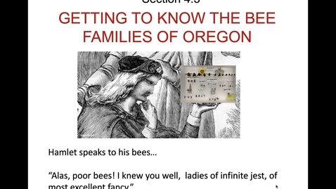Thumbnail for entry Bee Families - Intro