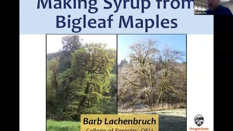 Thumbnail for entry Making Maple Syrup from Bigleaf Maples