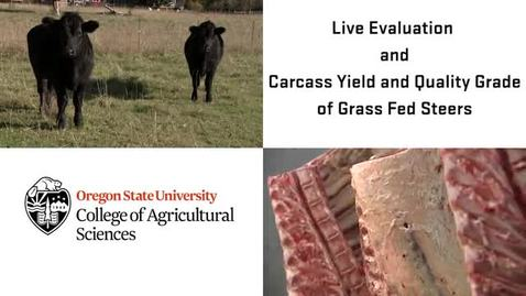 Thumbnail for entry Module 3: Live Animal Evaluation, and Carcass Yield & Quality Grading of Grass-Fed Steers