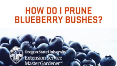 Thumbnail for entry How do I prune blueberry bushes?