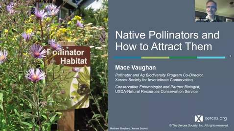 Thumbnail for entry Native Pollinators and how to attract them - Mace Vaughan - Washington County Master Gardener Lecture Series