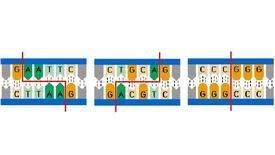 Thumbnail for entry Restriction Enzymes