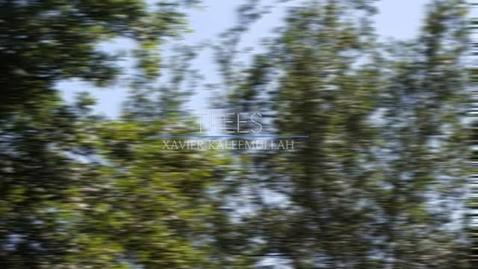 Thumbnail for entry Xavier Kaleemullah - Trees