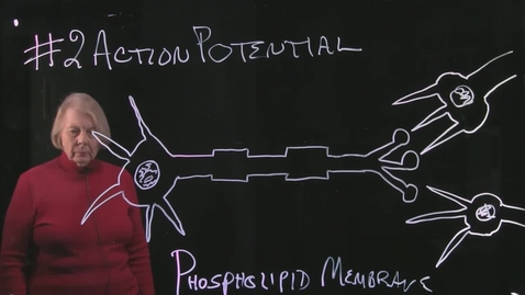 Thumbnail for entry Part 2 Action Potential