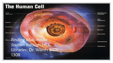 Thumbnail for entry Finding Multimedia Sources through HCC Libraries: Dr. Ward's BIOL 1308