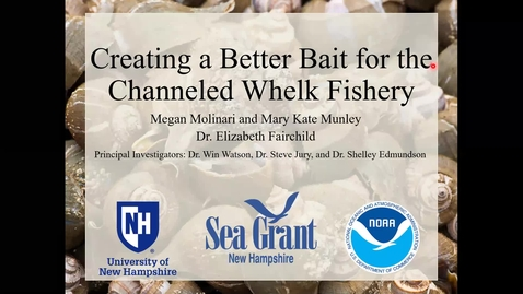 Thumbnail for entry Creating a Better Bait for the Channeled Whelk Fishery