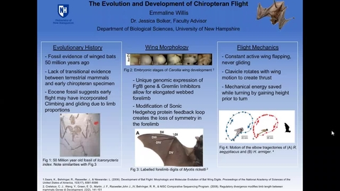 Thumbnail for entry The Evolution and Development of Chiropteran Flight