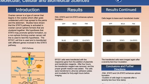 Thumbnail for entry The Role of STAT3 in Ovarian Cancer Sphere Formers