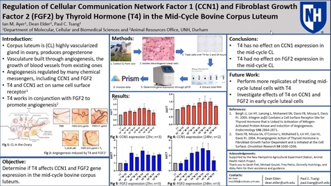 Thumbnail for entry Regulation of Cellular Communication Network Factor 1 (CCN1) and Fibroblast Growth Factor 2 (FGF2) by Thyroid Hormone (T4) in the Bovine Corpus Luteum