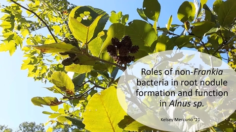 Thumbnail for entry Roles of non-Frankia bacteria in root nodule formation and function in Alnus sp. (updated oral)