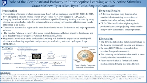 Thumbnail for entry Role of the Corticostraital Pathway in Learning with Nicotine Stimulus