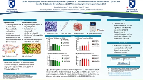 Thumbnail for entry Do the Phytoestrogens Daidzein and Equol Impact the Expression of Cellular Communication Network Factor 1 (CCN1) and Vascular Endothelial Growth Factor A (VEGFA) in the Young Bovine Corpus Luteum (CL)?