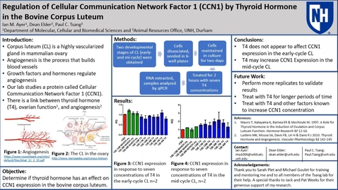 Thumbnail for entry Regulation of Cellular Communication Network Factor 1 (CCN1) by Thyroid Hormone  in the Bovine Corpus Luteum