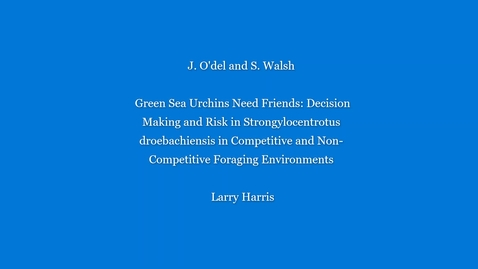 Thumbnail for entry UNH URC 2020 - Green sea urchins need friends: Decision making and risk in Strongylocentrotus droebachiensis in competitive and non-competitive foraging environments