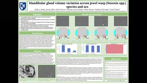 Thumbnail for entry Mandibular gland volume variation across jewel wasp (Nasonia spp.) species and sex, Holly Hoag Poster 44