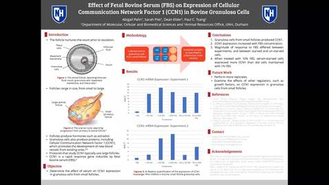 Thumbnail for entry Effect of Fetal Bovine Serum (FBS) on Expression of Cellular Communication Network Factor 1 (CCN1) in Bovine Granulosa Cells