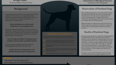 Thumbnail for entry Current Dog Breeding Practices Impacts on Health and Preservation of Purebred Dogs