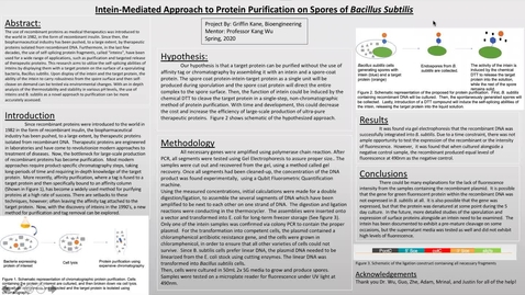 Thumbnail for entry Intein-Mediated Approach to Protein Purification on Bacillus Subtilis