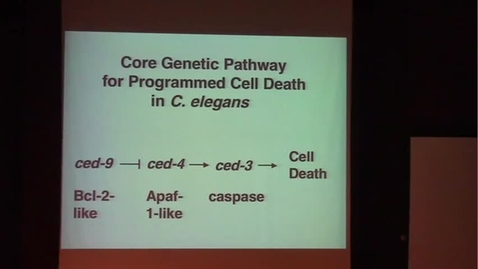 Thumbnail for entry Genetic Control of Programmed Cell Death in C. Elegans