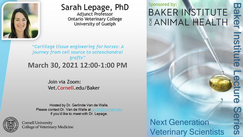"Thumbnail for entry Baker Institute Virtual Seminar, Sarah Lepage, PhD, Adjunct Professor, Ontario Veterinary College, University of Guelph   Title: ""Cartilage tissue engineering for horses: A journey from cell source to osteochondral grafts"""