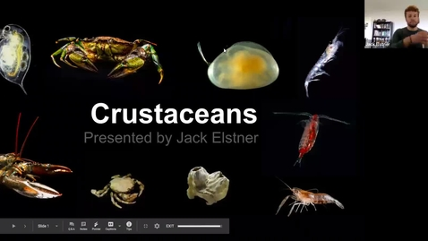 Thumbnail for entry Jack: Crustacea Trimmed