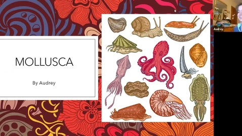 Thumbnail for entry Audrey's Mollusca Trimmed