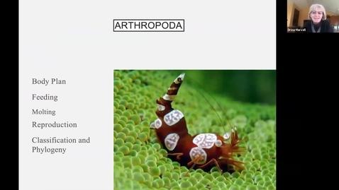 Thumbnail for entry Drew's Arthropoda Trimmed
