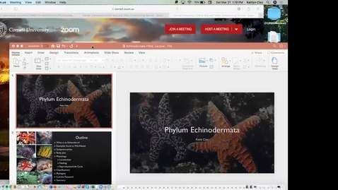 Thumbnail for entry Kaite Echinoderms Trimmed