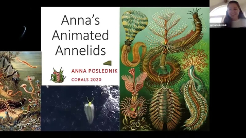 Thumbnail for entry Anna's Annelida Trimmed