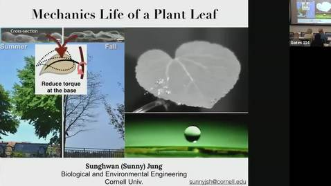 Thumbnail for entry The Mechanics Life of a Plant Leaf