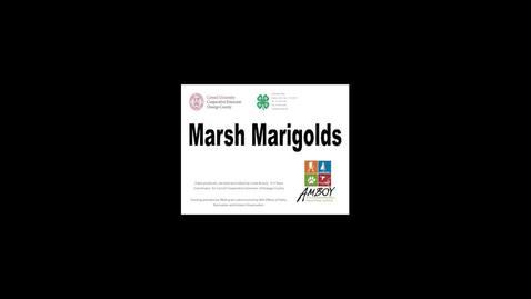 Thumbnail for entry CCE Oswego Marsh Marigolds
