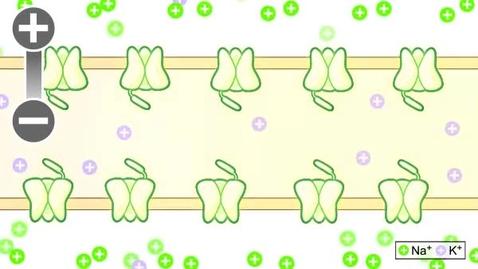 Thumbnail for entry pfiz_epi_03_01_01_01_vidStep3.flv