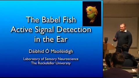 Thumbnail for entry CAM Colloquium, 2014-01-24 - Dáibhid Ó Maoiléidigh: The Babel Fish - Active Signal Detection in the Ear