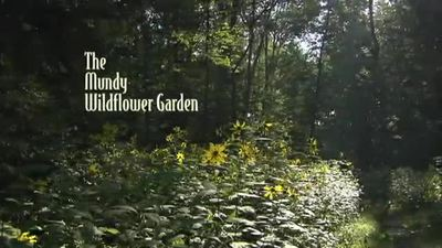 video thumbnail for mundy wildflower garden video - Wildflower Garden
