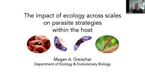 Thumbnail for entry CAM Colloquium - Megan Greischar (2/19/21)