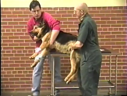 Dr  de Lahunta Video Collection - College of Veterinary