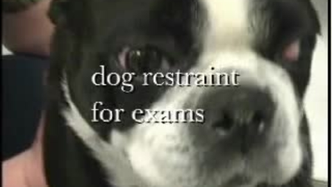 Thumbnail for entry Canine Basic Restraint 2