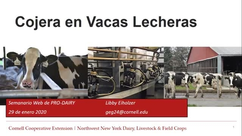 Thumbnail for entry Cornell Spanish Dairy Webinars:Lameness in Dairy Cows, Cojera en Vacas Lecheras
