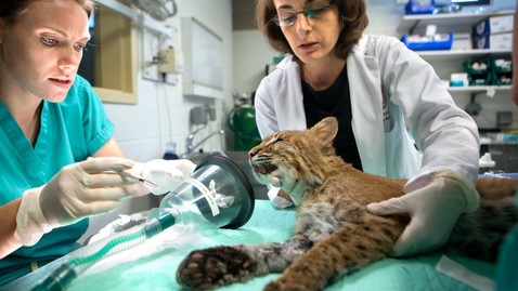 Thumbnail for entry Veterinary Science Taking Care of Animals - at the Vet and in the Wild!
