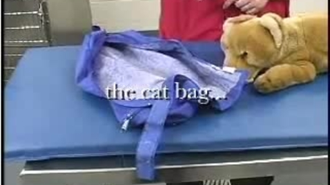Thumbnail for entry Kitty in a Bag